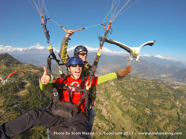 When you go parahawking, birds are given meat as a reward for guiding gliders to the thermals.