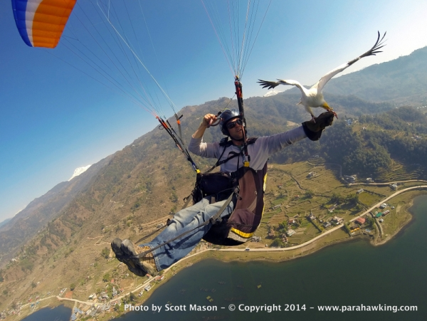 Scott Mason began the Parahawking Project to raise awareness about the plight of Asian vultures.